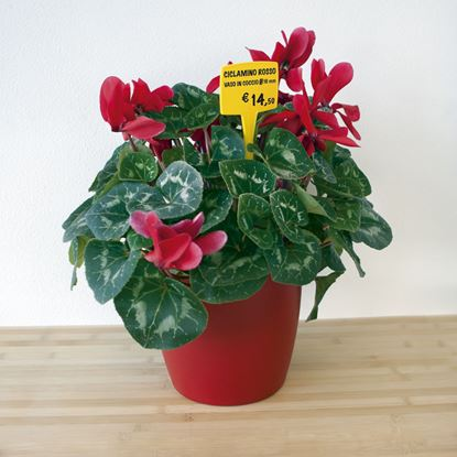 Picture of PLASTIC VERTICAL PRICE TICKET HOLDER FOR FLOWERPOT